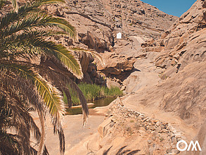 The picturesque palm canyon Buen Paso in Fuerteventura is also a climbing area