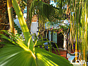 view trough the plam trees on the little terrace in front of surf camp bungalows